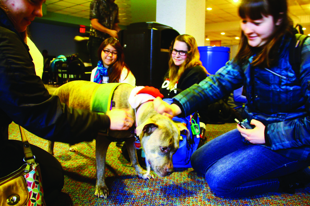 Photo by Evan Ludes/ The Gateway Students take a break from studying to pet puppies inside Milo Bail Student Center