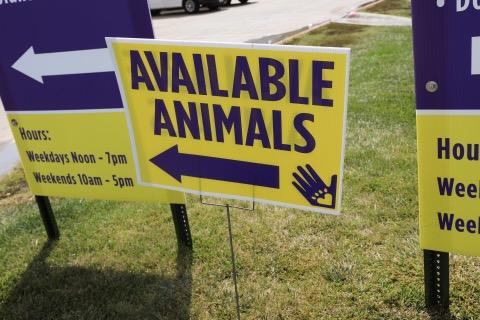 "A sign that says ""available animals"" referencing a pet sale by the Nebraska Humane Society"