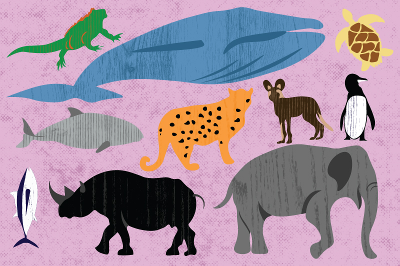An illustration of various animals with a pink background