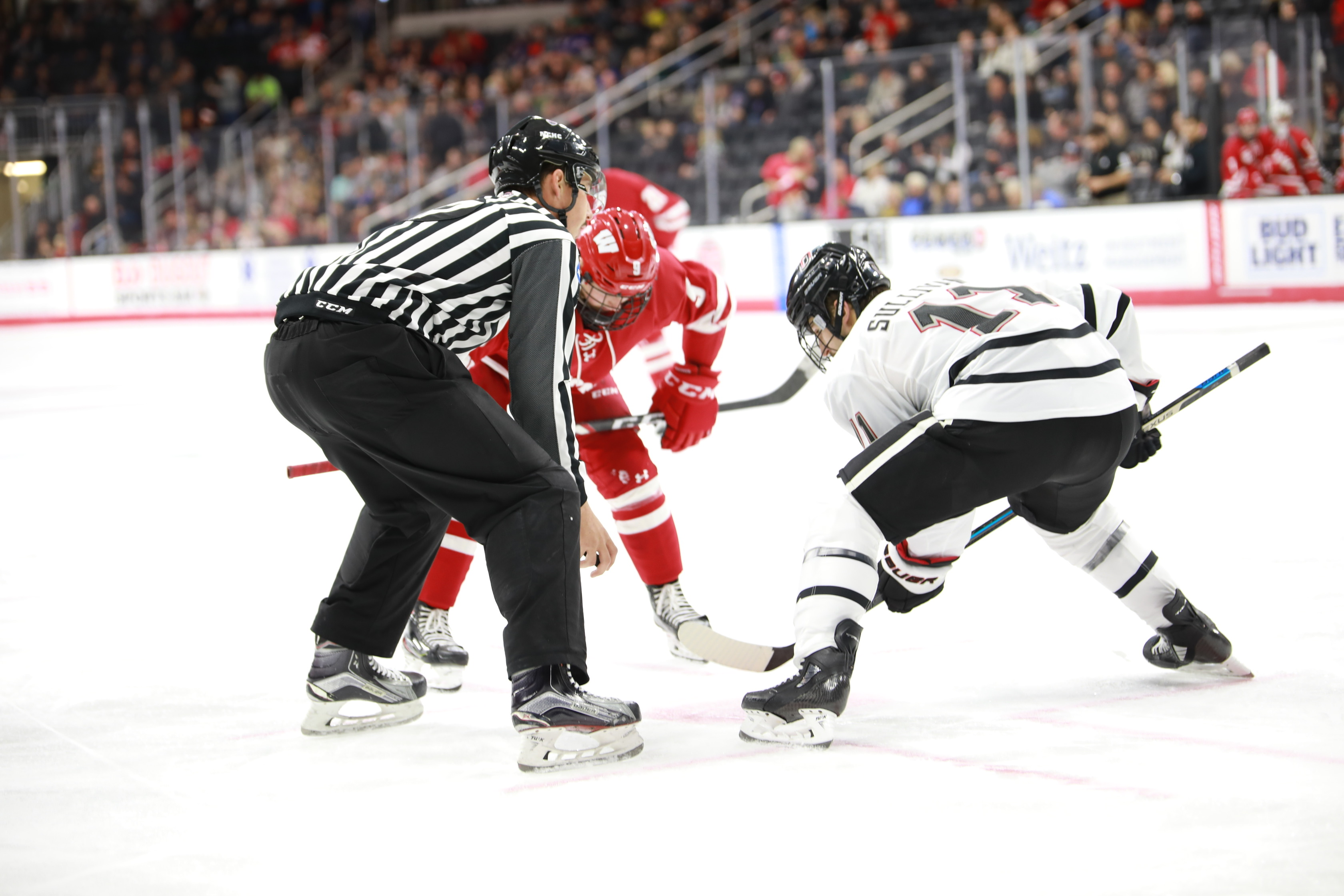 Two hockey players facing off on the ice